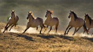 Wild-Horses-300x169