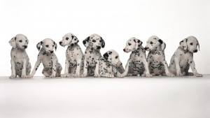 dogs-300x169
