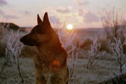 Hunden Charlie en vinterdag